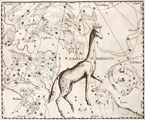 Созвездие Жираф в атласе Гевелия