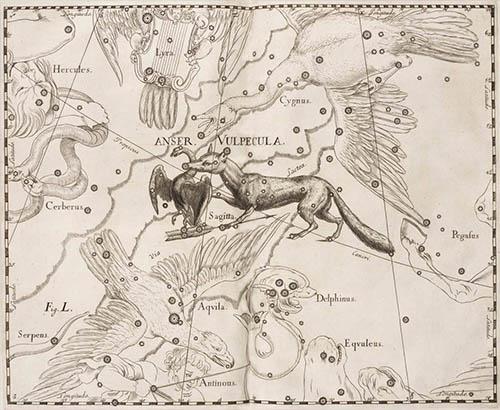Созвездие Лисичка с гусем в атласе Гевелия